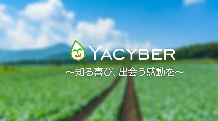 自社プロダクト「YACYBER」